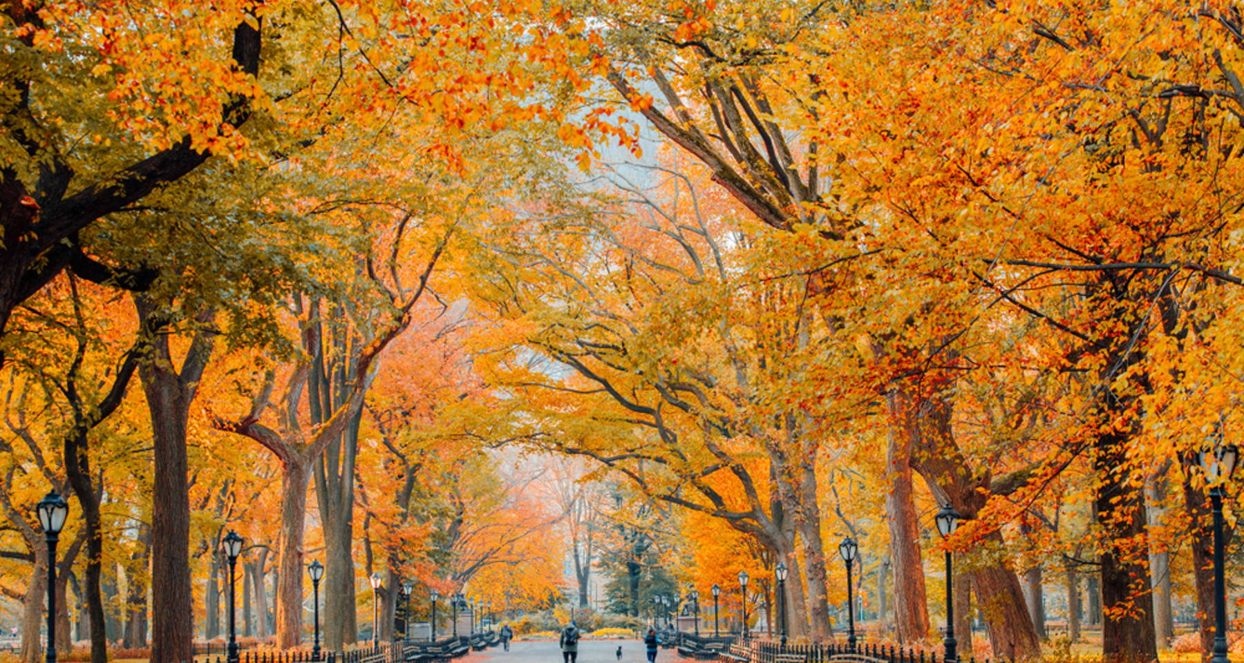 Vivaldi's The Four Seasons: Fall - Celebration of first day of fall